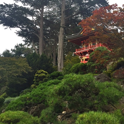 This August, I went on a lovely trip to California to visit my family. My first stop after getting off the plane was the Japanese Tea Garden in San Francisco.