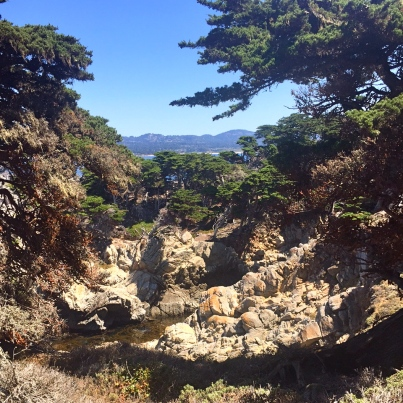 One of the places we hiked was Point Lobos. I used to go there every week when I lived in Big Sur and think it is probably the most beautiful place on the planet.