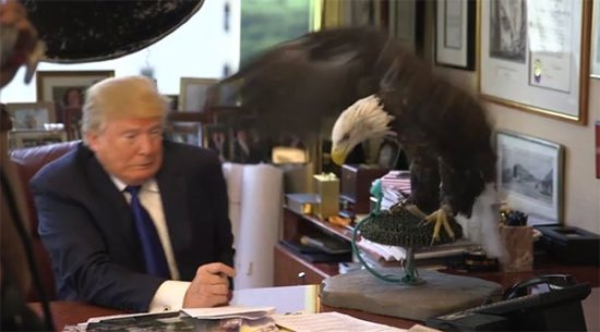 donald-trump-attacked-by-bald-eagle-ftr
